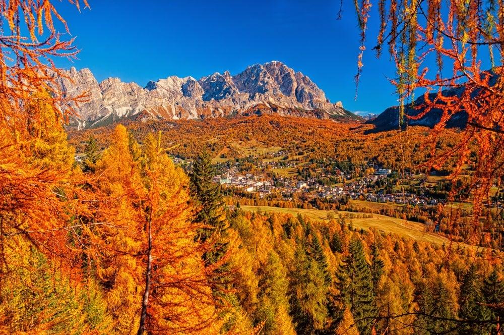 European larches with mountain backdrop.