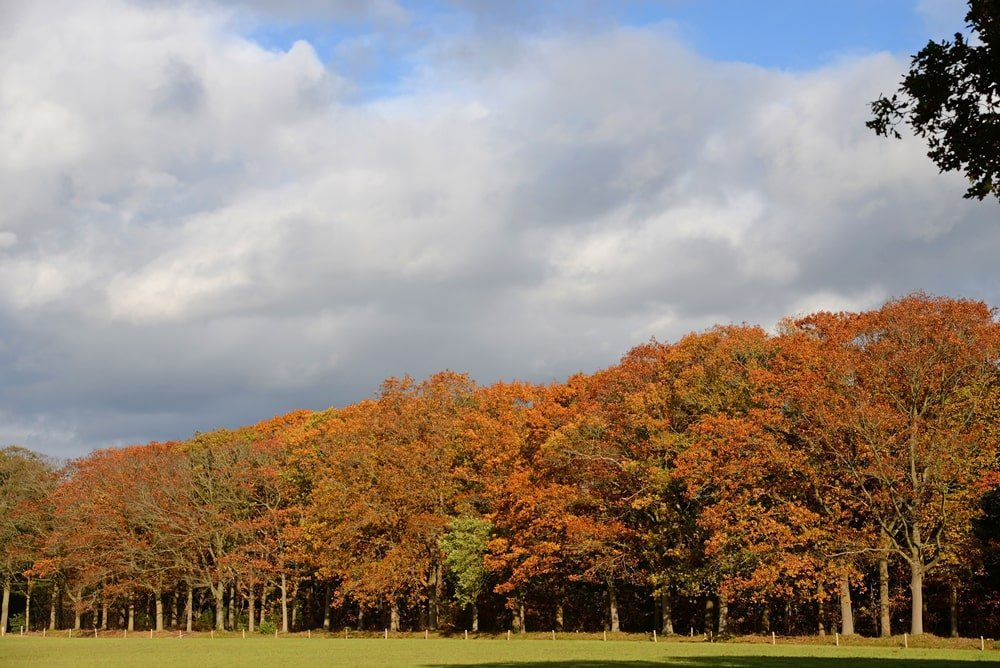 Norther red oak forest