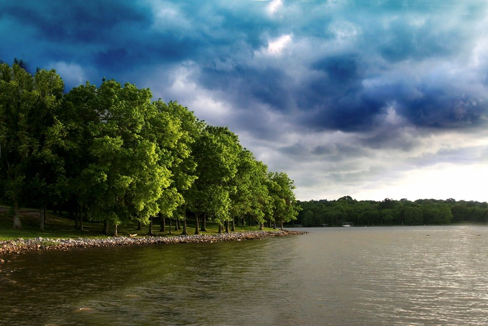 Hickory tree on a lakeside under spring storm clouds.