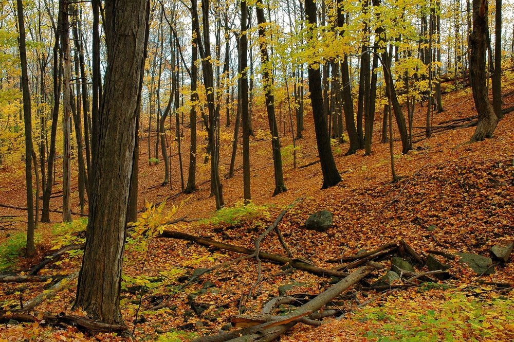 Forest during autumn.