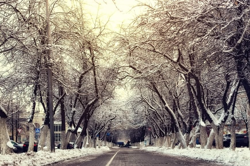 A wintry road lined with slippery elm trees.