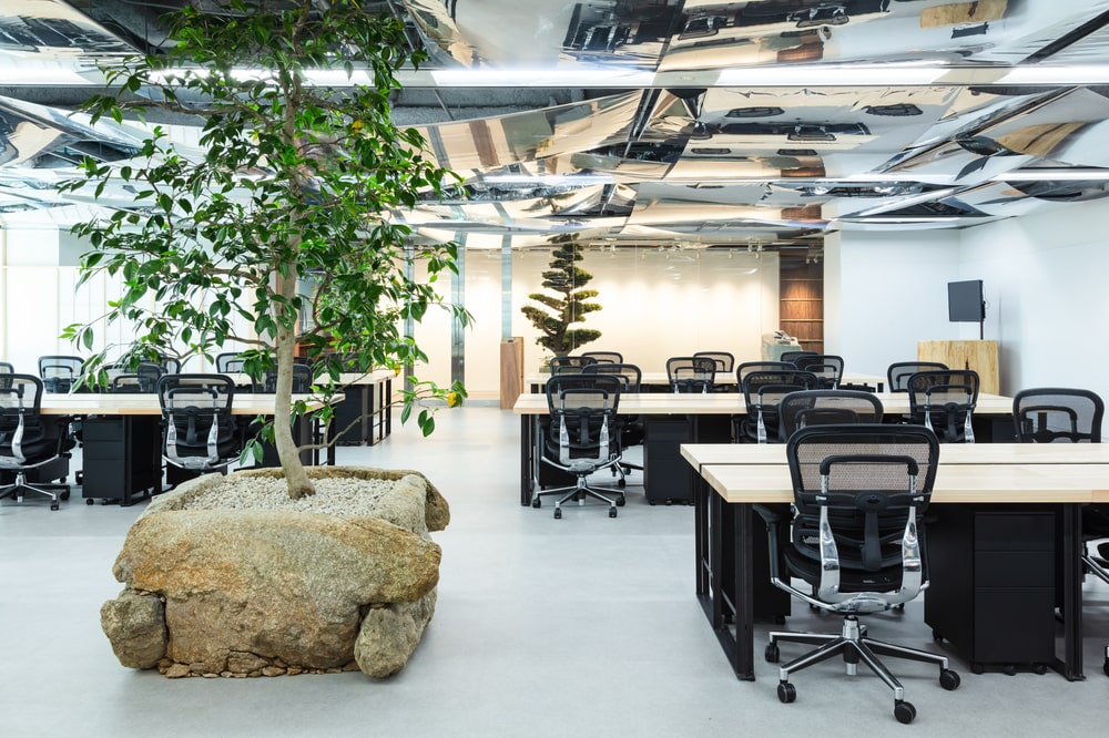 This is a close looka t the large potted plant in the middle of the office with a decorative rock at the base.
