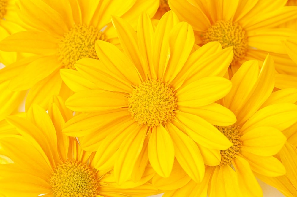 This is a close look at a bunch of yellow flowers.