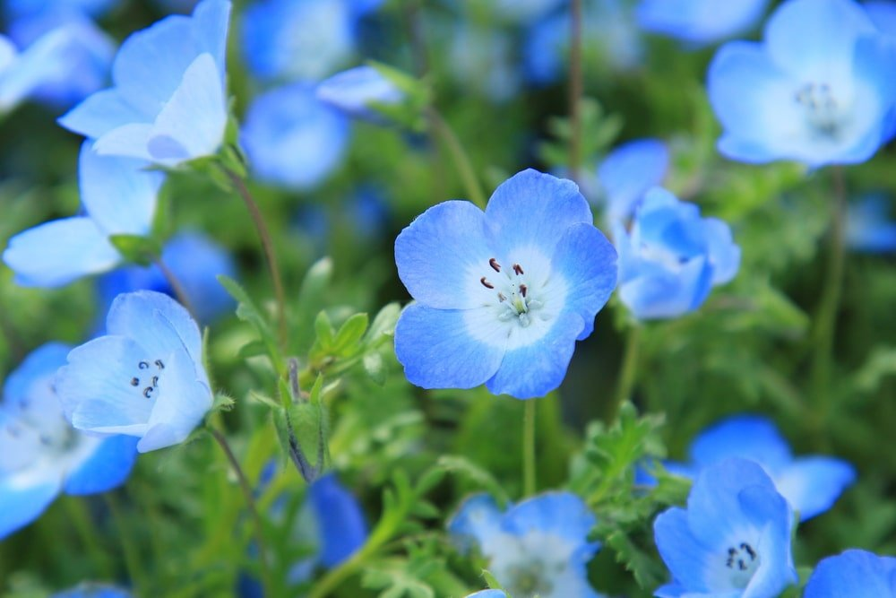 A close look at a garden of blue flowers.