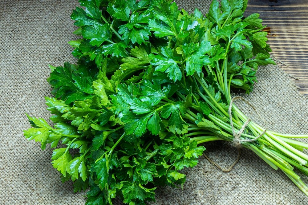 A close look at a large cluster of parsley.