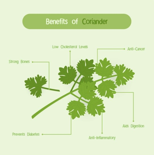 An infographic depicting the health benefits of coriander.