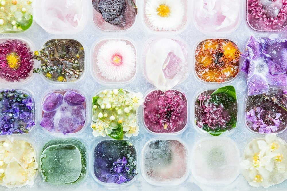 A close look at various frozen flowers and herbs used as beauty products.