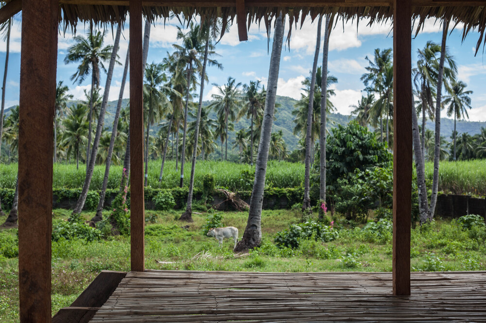 The hut also has open walls that gives a view of the surrounding tall tropical trees.