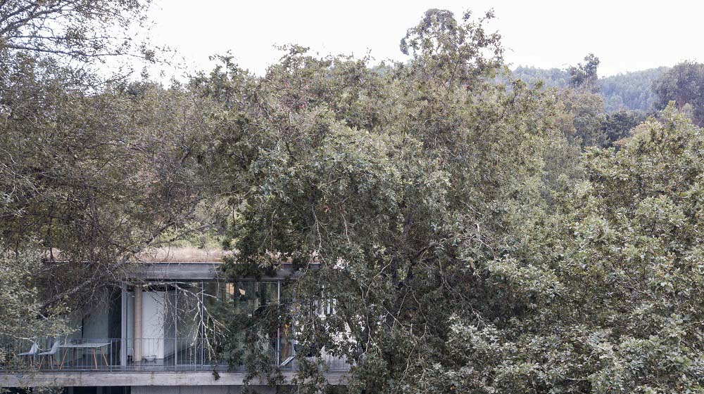 The surrounding treetops and foliage pairs well with the house exterior.
