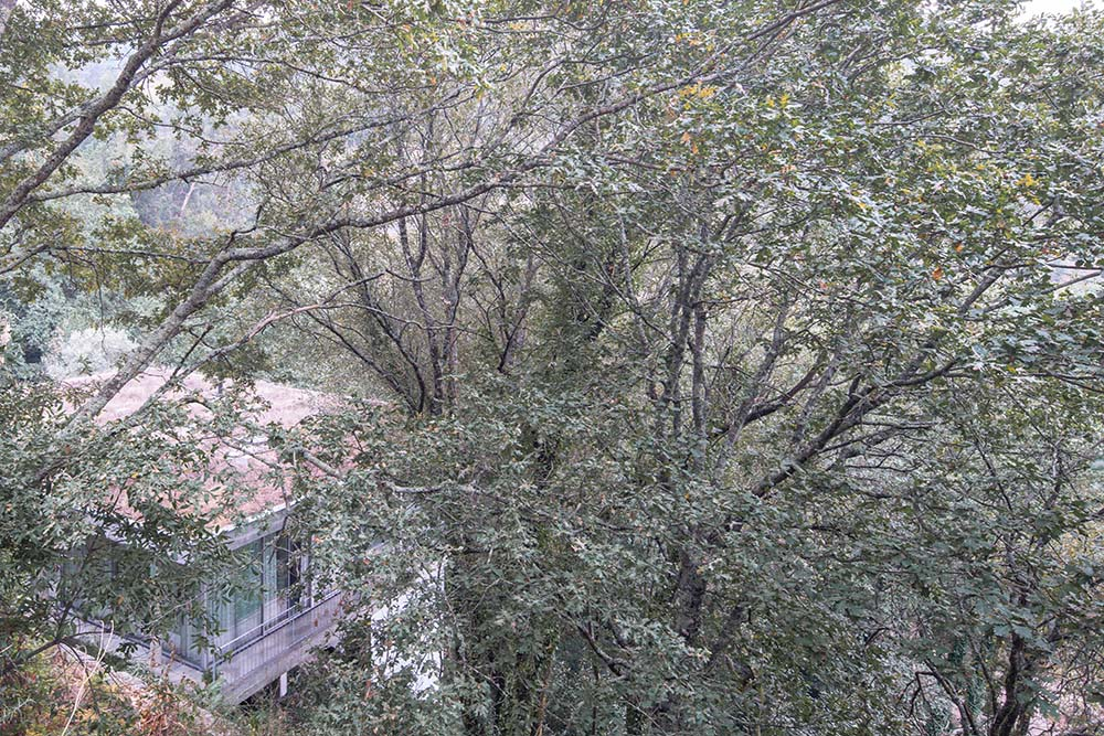 The surrounding thick foliage of treetops pair well with the bright colors of the house.