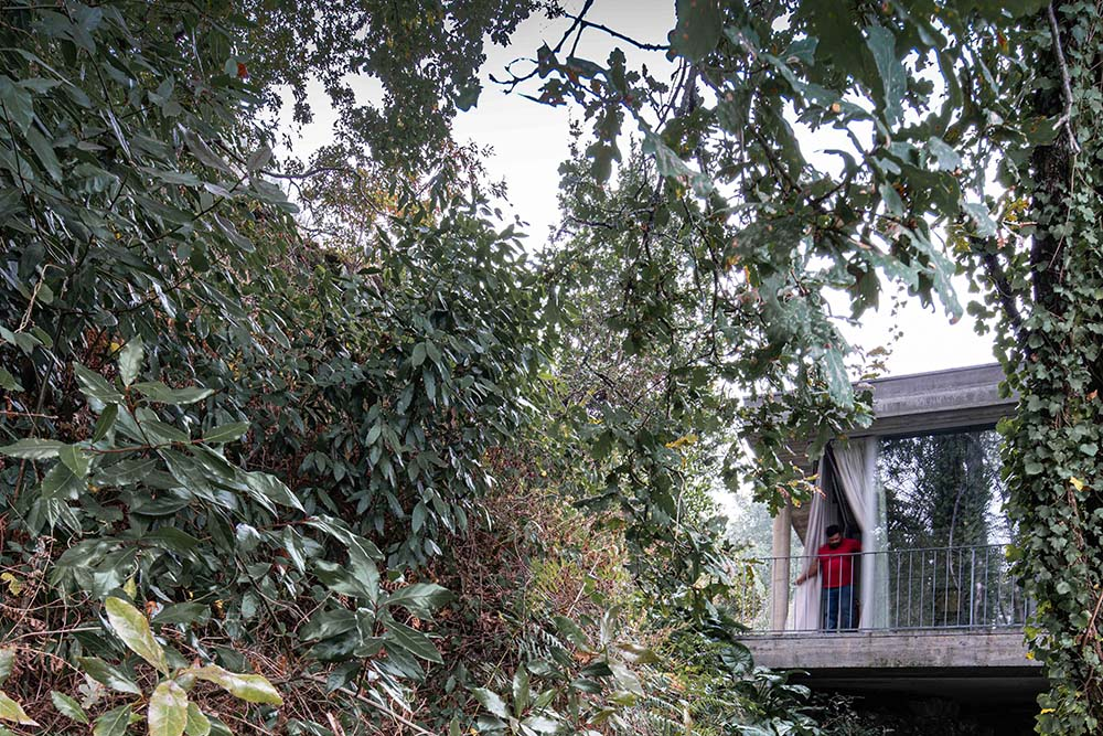 This is a glimpse of the balcony door that is almost hidden by the thick foliage on the side.