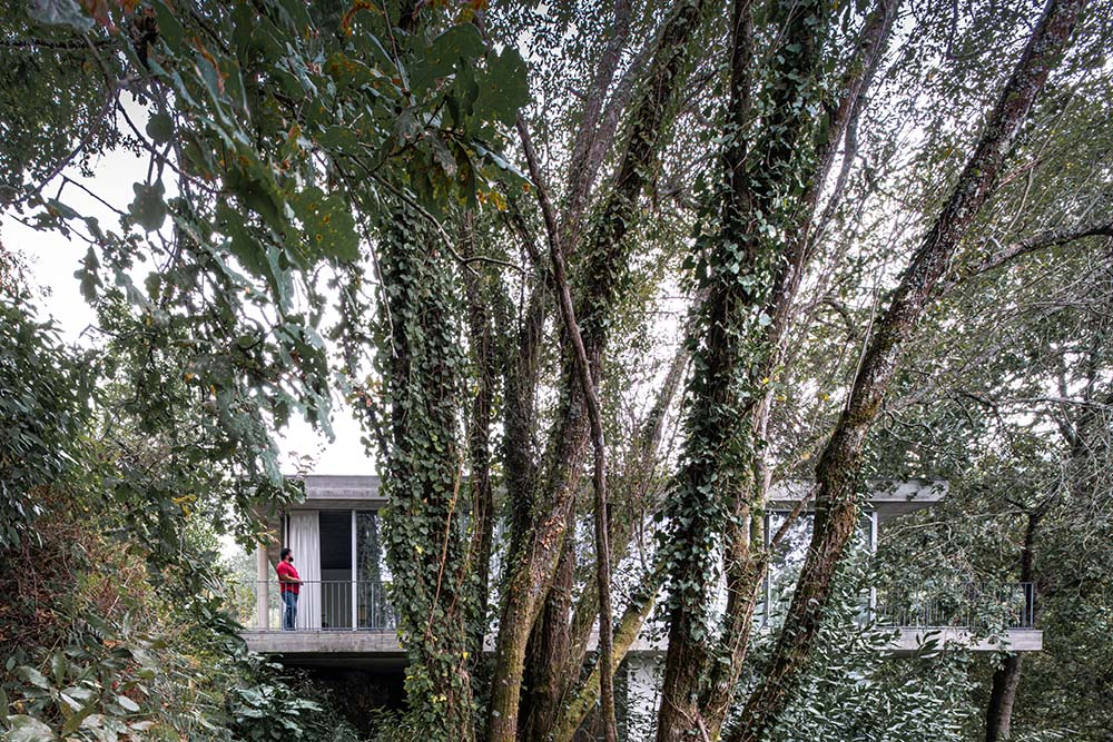 This is a close look at the tall trees and trunks that hides the house behind its foliage.