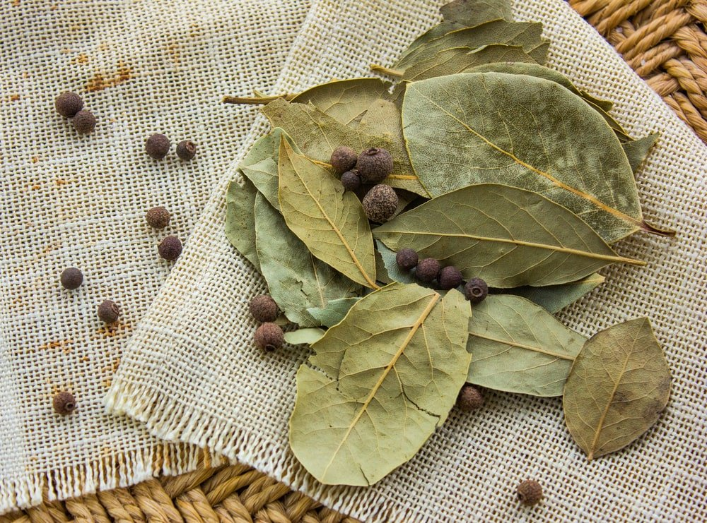 A close look at a bunch of dried bay leaf.