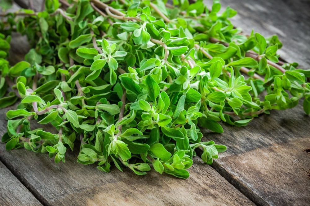 A bunch of fresh marjoram herb on a wooden table.