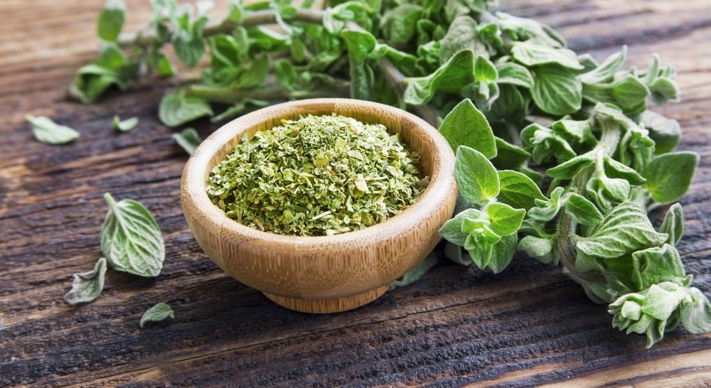 Fresh and dried oregano herb on a wooden table.