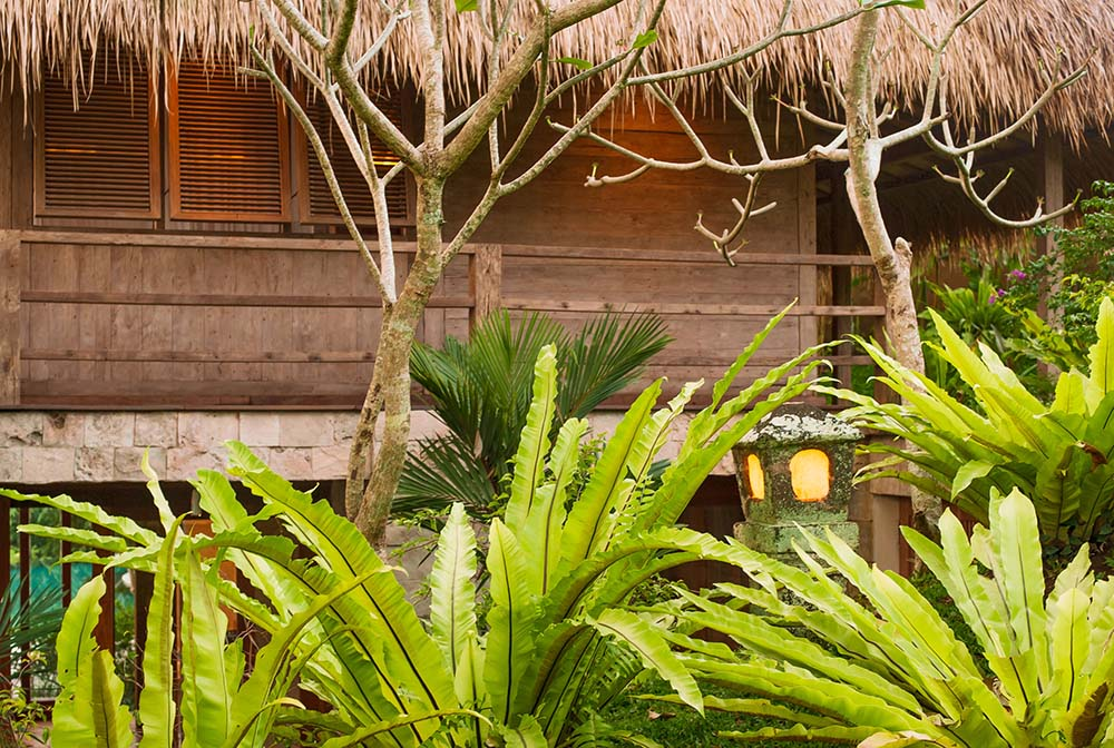 This is a close look at the lush landscaping of tropical shrubs just beyond the wooden railing of the balcony.