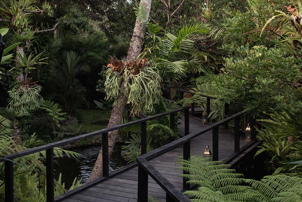 This is another look at the wooden walkway that is surrounded by tropical trees and shrubs of the landscape.