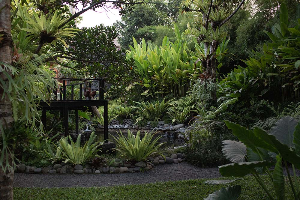 This is a close look at the garden just beyond the bridge walkway with a stream and pond surrounded by lush vegetation.