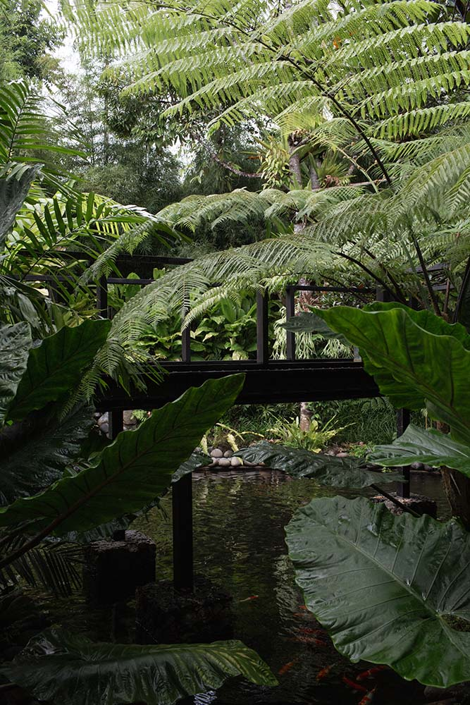 This is a another look at the lush landscaping that surrounds the walk through the wooden walkway that leads to the main entrance of the house.