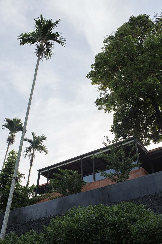 This is a view of the house showcasing the roof and the tall tropical trees.
