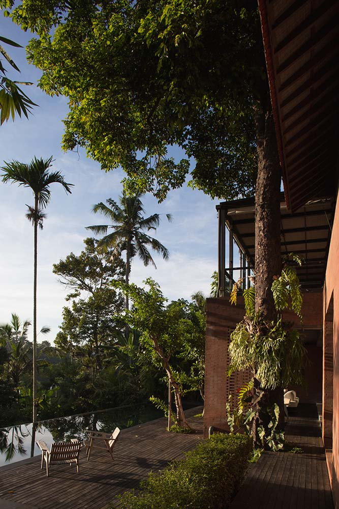This is another look at the lush landscape with tall tropical trees and thick shrubs.