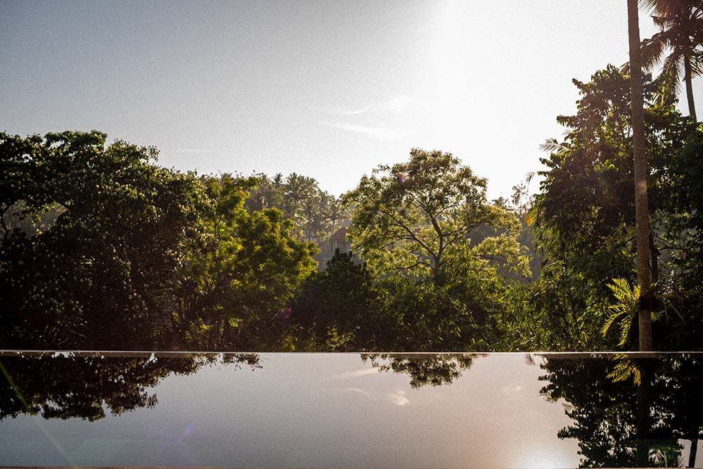 This is the view of the treetops from the vantage of the infinity pool.