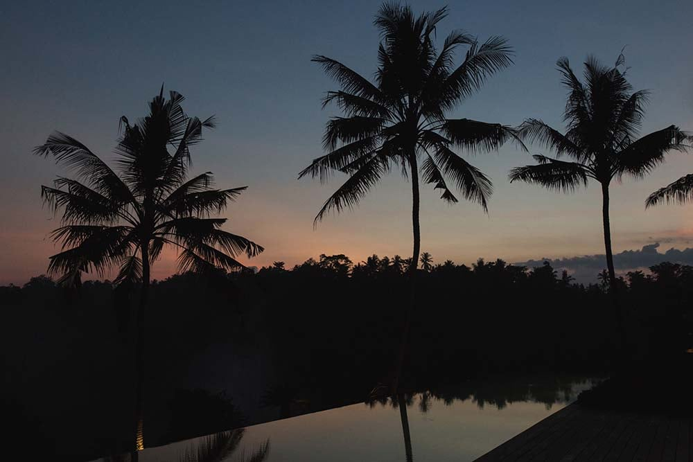 This is a nighttime view of the infinity pool showcasing the silhouettes of the tall tropical trees.