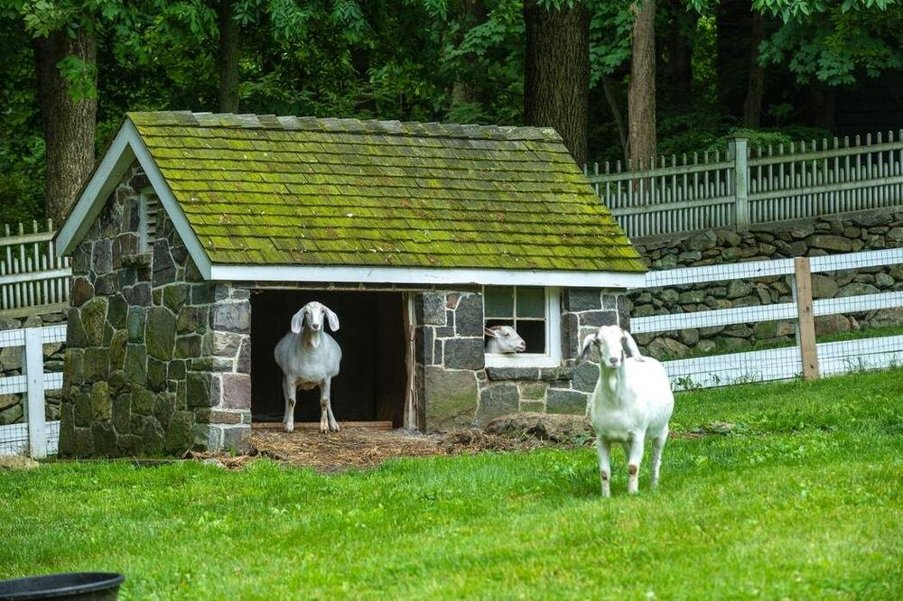 This is a look at the goat house that has mosaic stone walls and green roof by the white fence. Image courtesy of Toptenrealestatedeals.com.