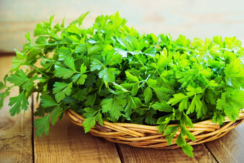 This is a close look at a bunch of parsley on a basket.
