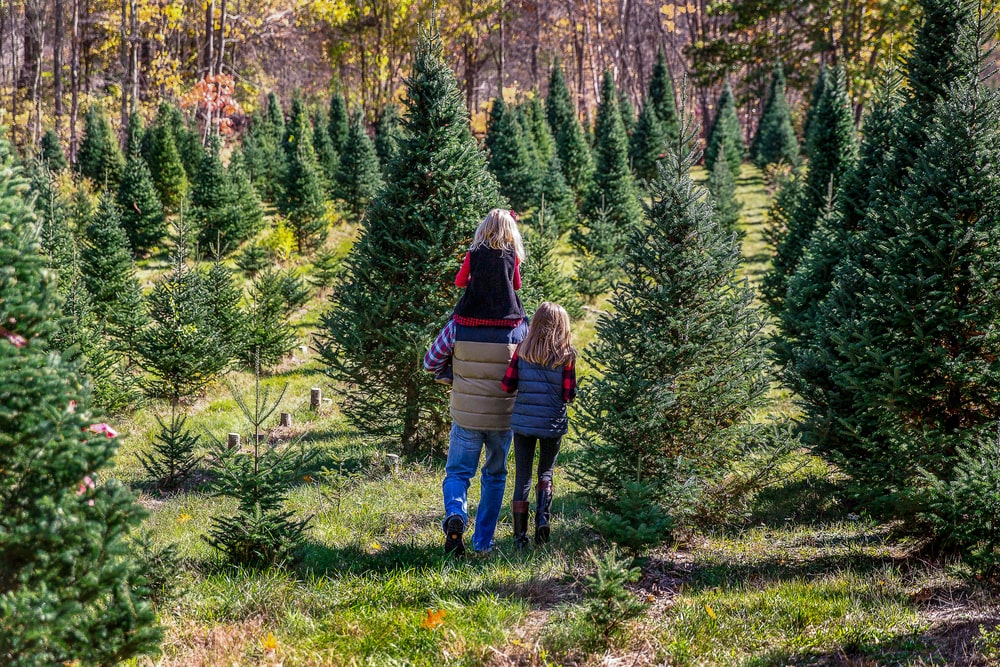 This is a close look at a family walking through a Christmas tree farm.