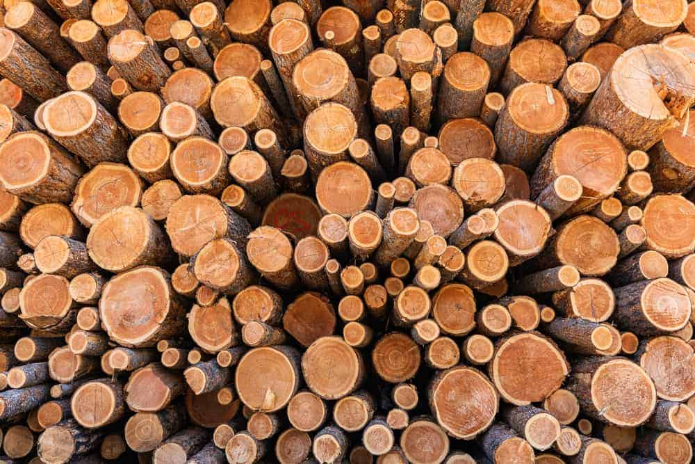 This is a close look at the piles of douglas fir tree logs.