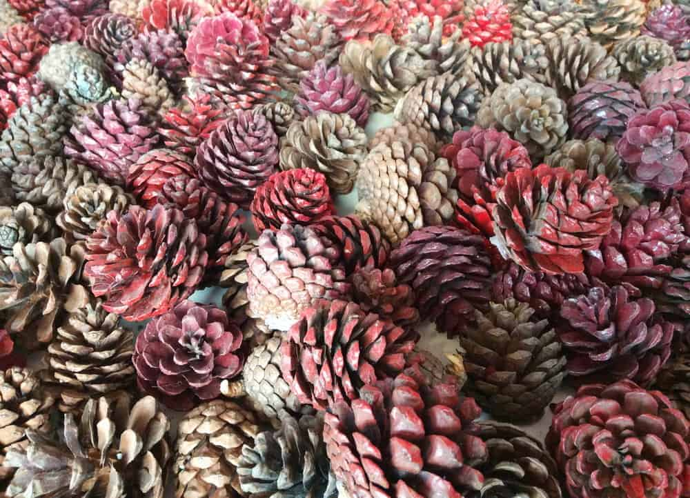 This is a close look at a collection of pine cones.