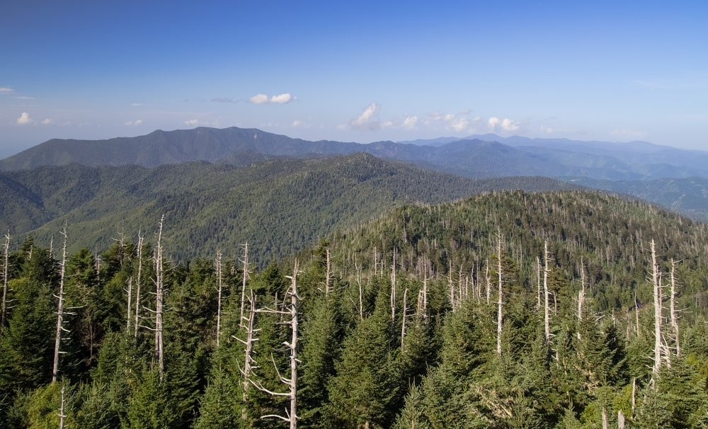 This is an aerial view of the forest that has Eastern Hemlock trees.