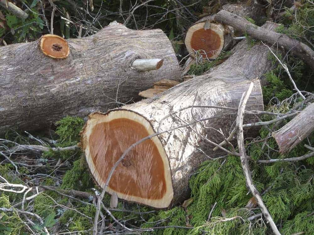 This is a close look at a bunch of juniper tree logs.