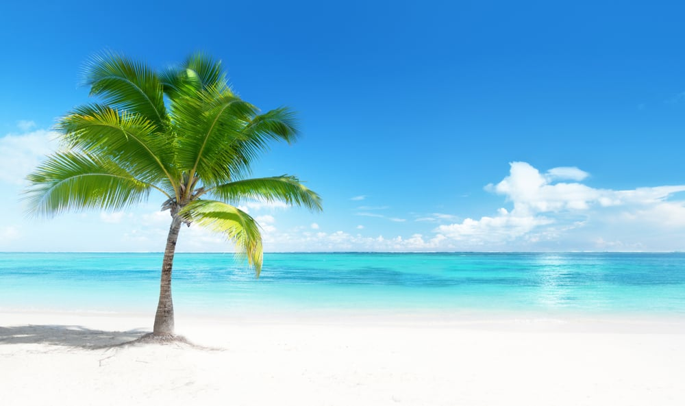 single coconut palm tree growing on a pristine white sandy beach next to turquoise ocean