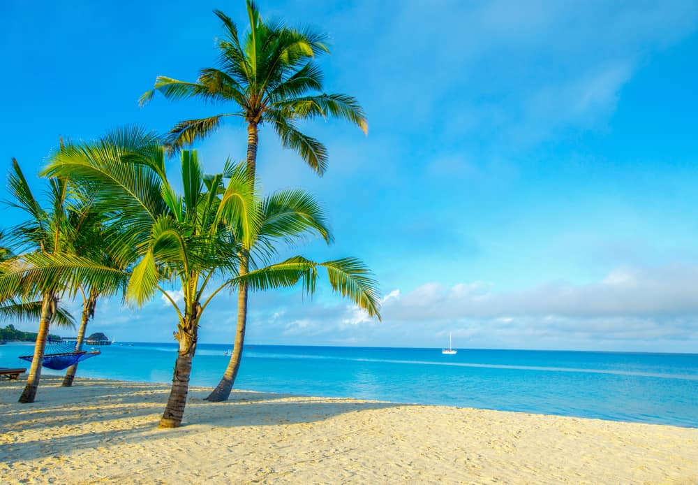 cluster of coconut palm trees growing on a beach in front of a crystal blue ocean with small sailboat