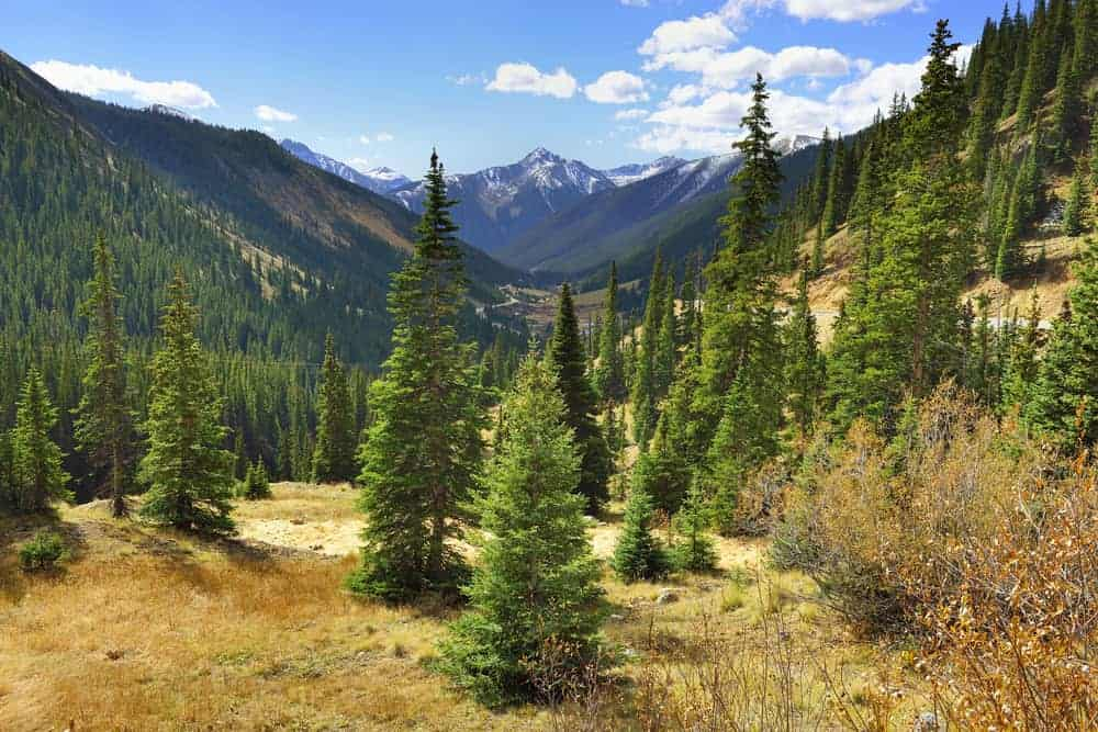 This is a look at a valley with a forest of spruce trees.