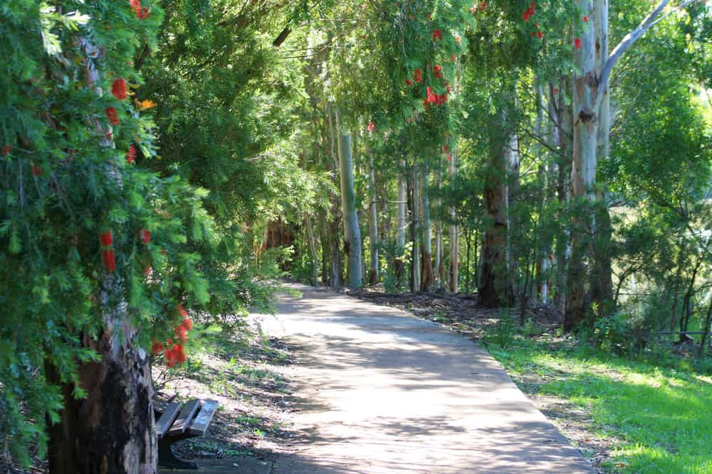 Beautiful pathway in a dense lush forest with a large bottlebrush shrub growing in the foreground
