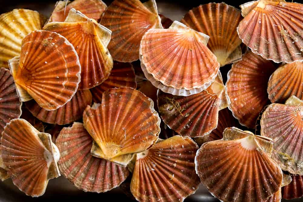 This is a close look at a bunch of scallops.