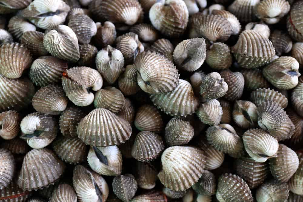 This is a close look at a pile of cockles.
