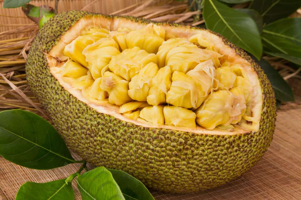 Ripe pieces of jackfruit in its husk used as a bowl.
