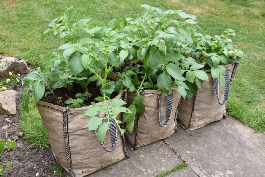 Bag garden