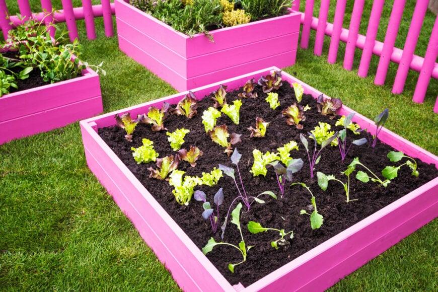 Colorful veggie garden
