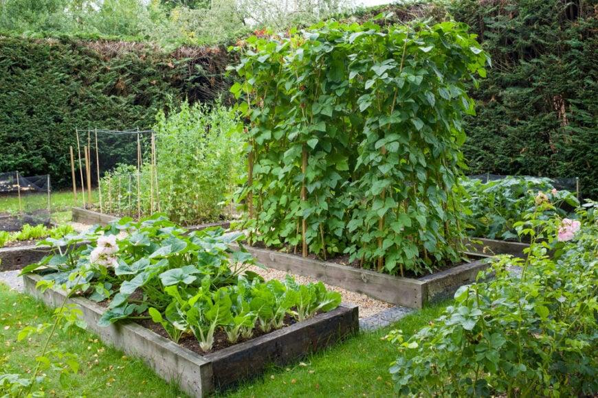 Large container veggie garden in backyard