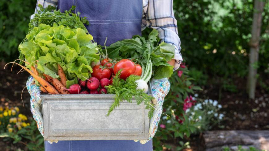 Basket of veggies from garden