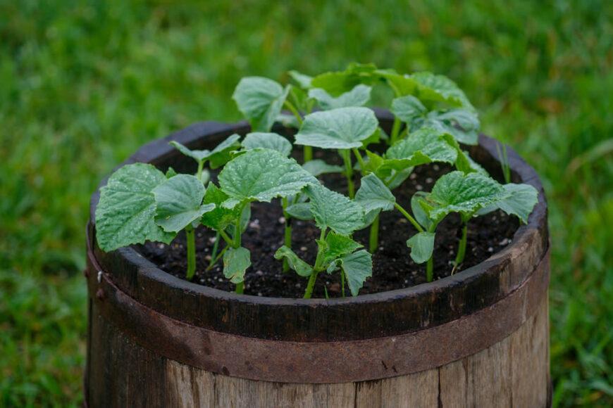 Barrel garden photo