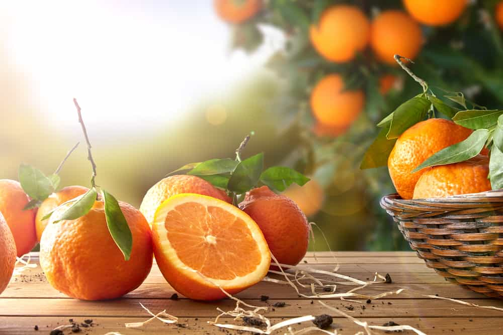 This is a close look at a bunch of fresh ripe oranges on a wooden table.
