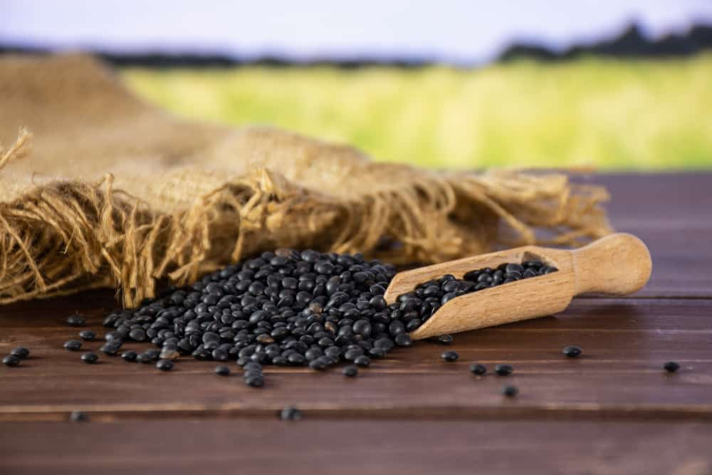 These are black beluga lentils with a scooper on a wooden table.