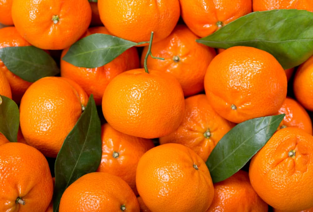 This is a close at a bunch of small tangerines with leaves.