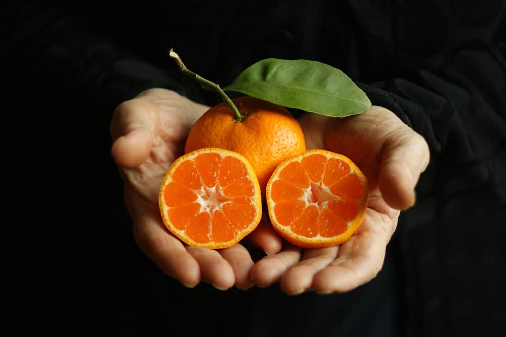 This is a close look at an orange a couple of slices on a pair of hands.